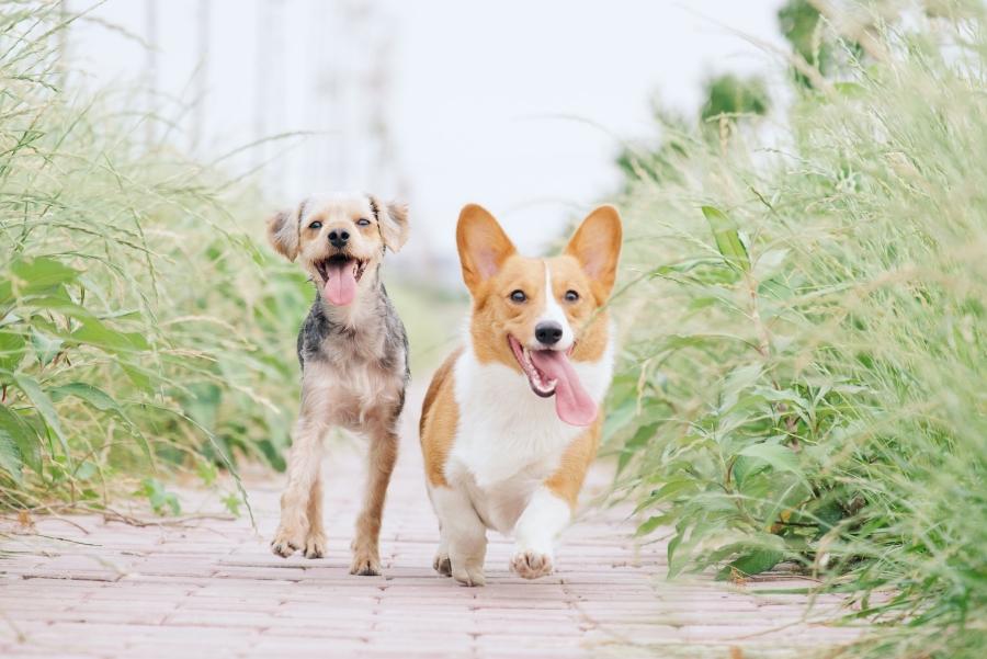 【心理測驗】喜歡哪個犬種,就知道你是怎樣的人?