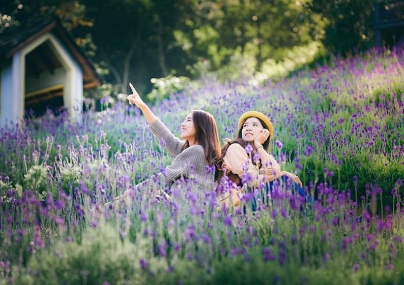 【全台懶人包】紫色風暴來襲!浪漫的薰衣草花海景點特輯