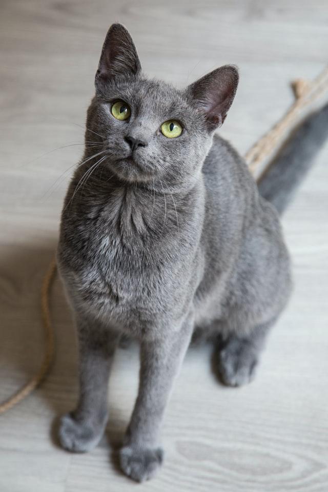 【心理測驗】從喜歡的貓咪品種,就可以知道你的隱藏性格?貓奴快來測測看!