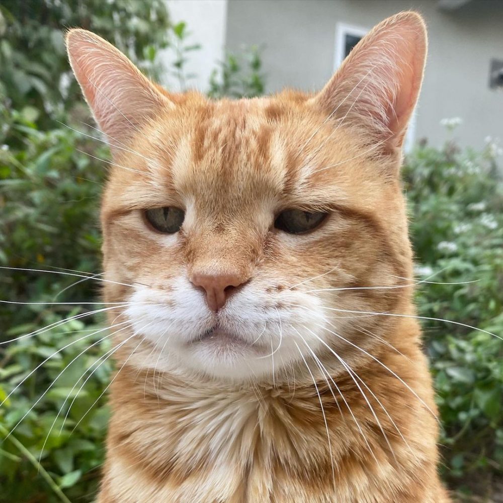 橘貓頂著「厭世臭臉」紅遍網路,網:根本是星期一的me