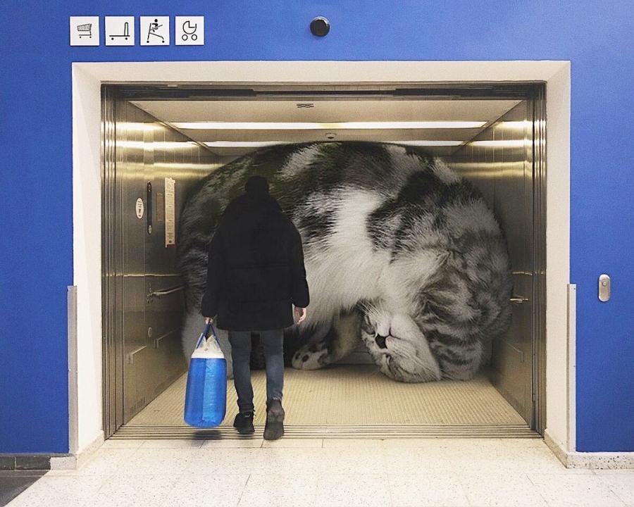 巨型萌物!在城市裡大搞怪的「巨無霸貓貓」,網:我還不吸爆!