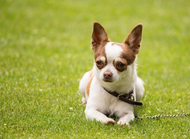 【心理測驗】如果你是狗狗會是什麼品種?超好玩形容詞小測驗,你的靈魂伴狗是哪款?
