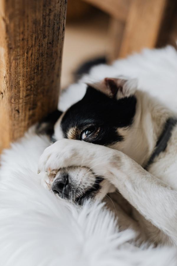 【狗狗冷知識】臨終狗狗前往汪星球的5大徵兆, 其實牠正在默默與你道別