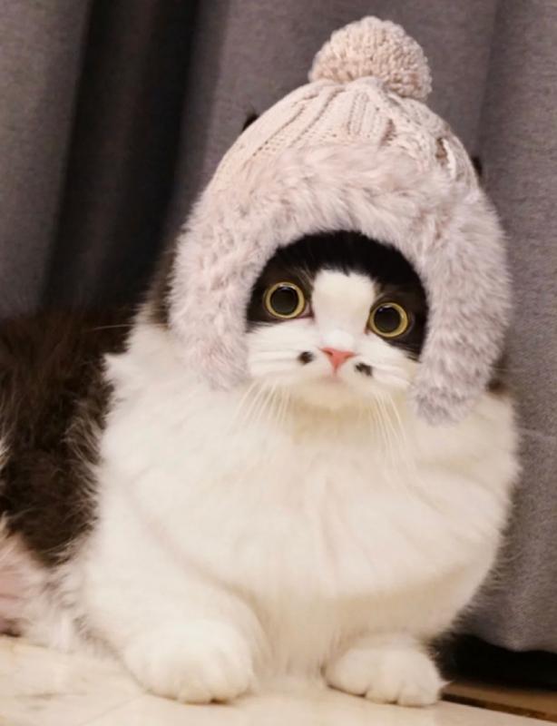 毛利小五郎4ni?全網最可愛的「八字鬍小貓咪」,網融化:完全長在萌點上