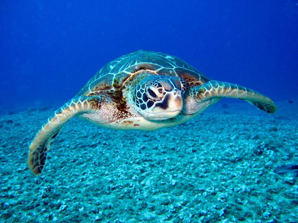 膽小鬼可以玩的海龜湯!精選10題「不可怕」海龜湯懶人包,驚悚成分直接歸0
