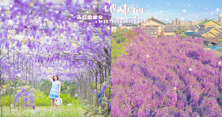 【2018情報】日本這幾個夢幻「紫藤花瀑布」仙境美到令人窒息!櫻花季後下一波消息快跟上!