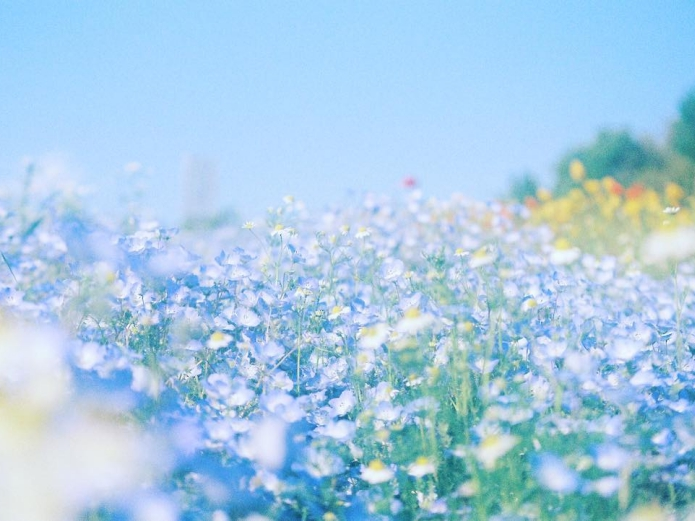 櫻花只是春天的開始!編輯推薦京阪奈6大賞花踩點,坐在一大片春夏花海中野餐我人生無憾了!