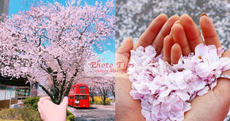櫻花季到了~N個小方法學起來,今年讓你櫻花美照拍的嚇嚇叫!拍照姿勢、構圖大公開!