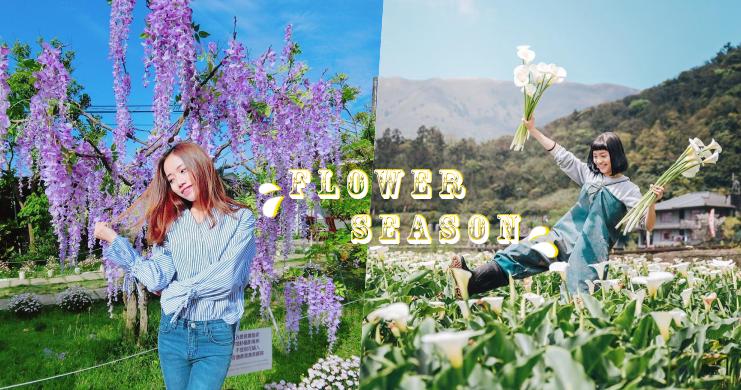 春天來了,花季也來了!盤點台灣花海盛開景點,趁著花季當一波花仙子吧!